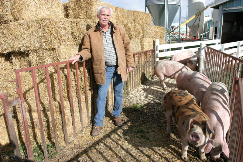 Mature pigs with Farm Owner